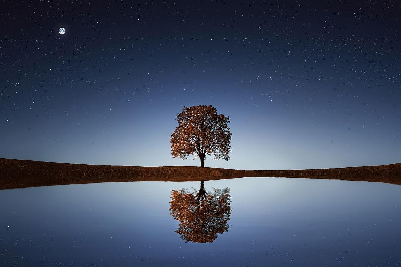 気品ある佇まいの木