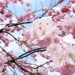 Sobotni piąteczek #09 – fakapy ludzkości i magnoliowy falstart