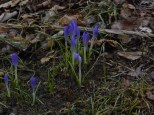 Flower5