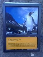 Penguins - 2