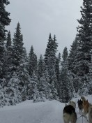 dogsledding - 8