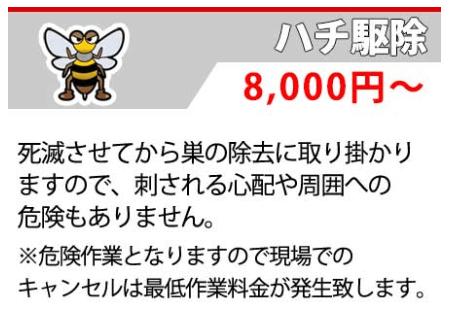 Bee Extermination