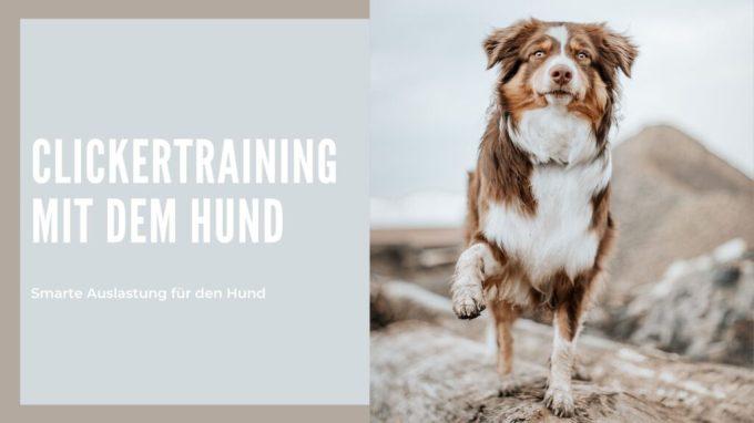Clickertraining mit dem Hund Anleitung