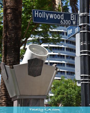Hollywood Vine