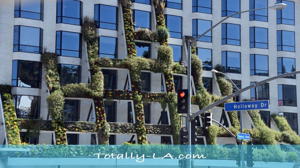 Vertical gardens in LA