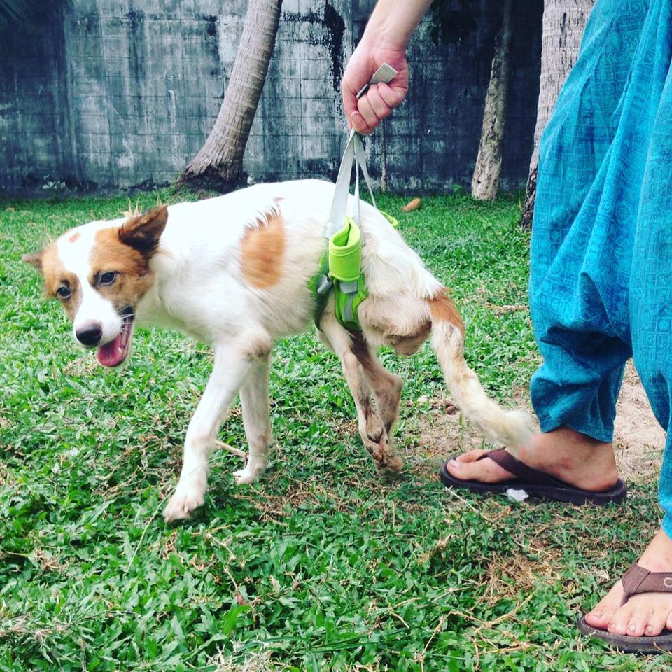 Source: Facebook/Thai Street Paws Rescue