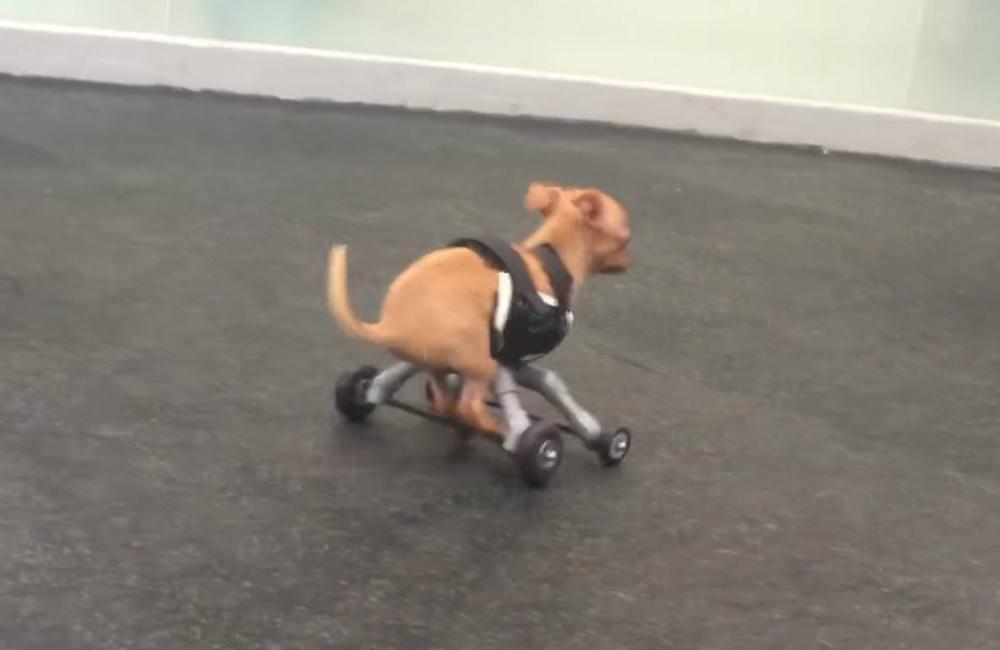 Image: YouTube/San Francisco SPCA