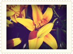 0e594-1513flowerstamp