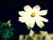 1be15-1511flower