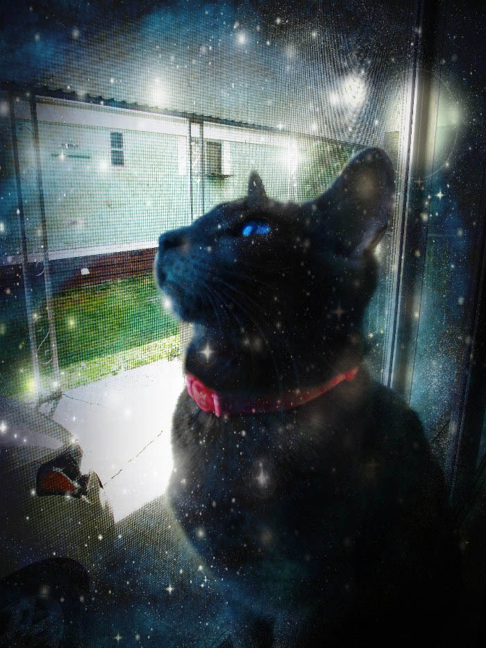 Space Kitteh