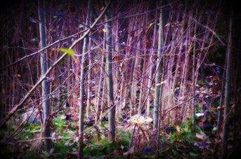 8fd07-0474pinktrees