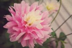 af389-0721pinkflower
