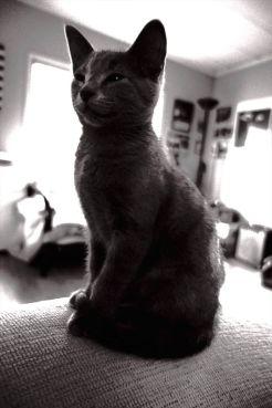 b02b0-0829graycat