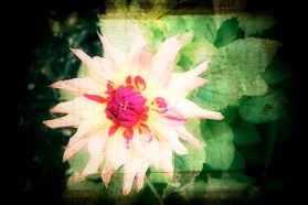 bb1bb-0384flower