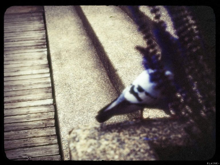 Officer Pigeon… Out!