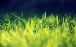 banner-grass