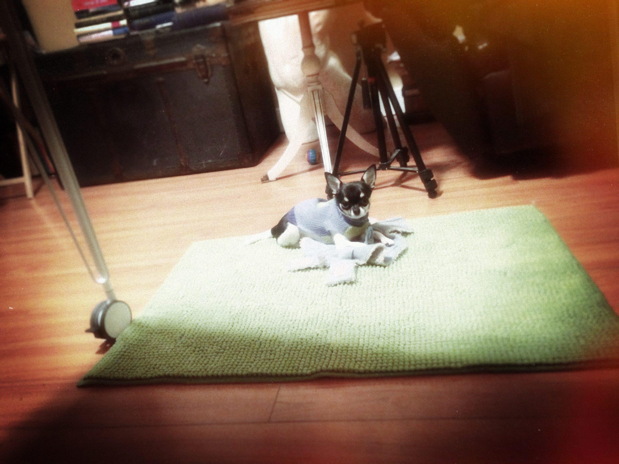 Smidge on new Carpet!