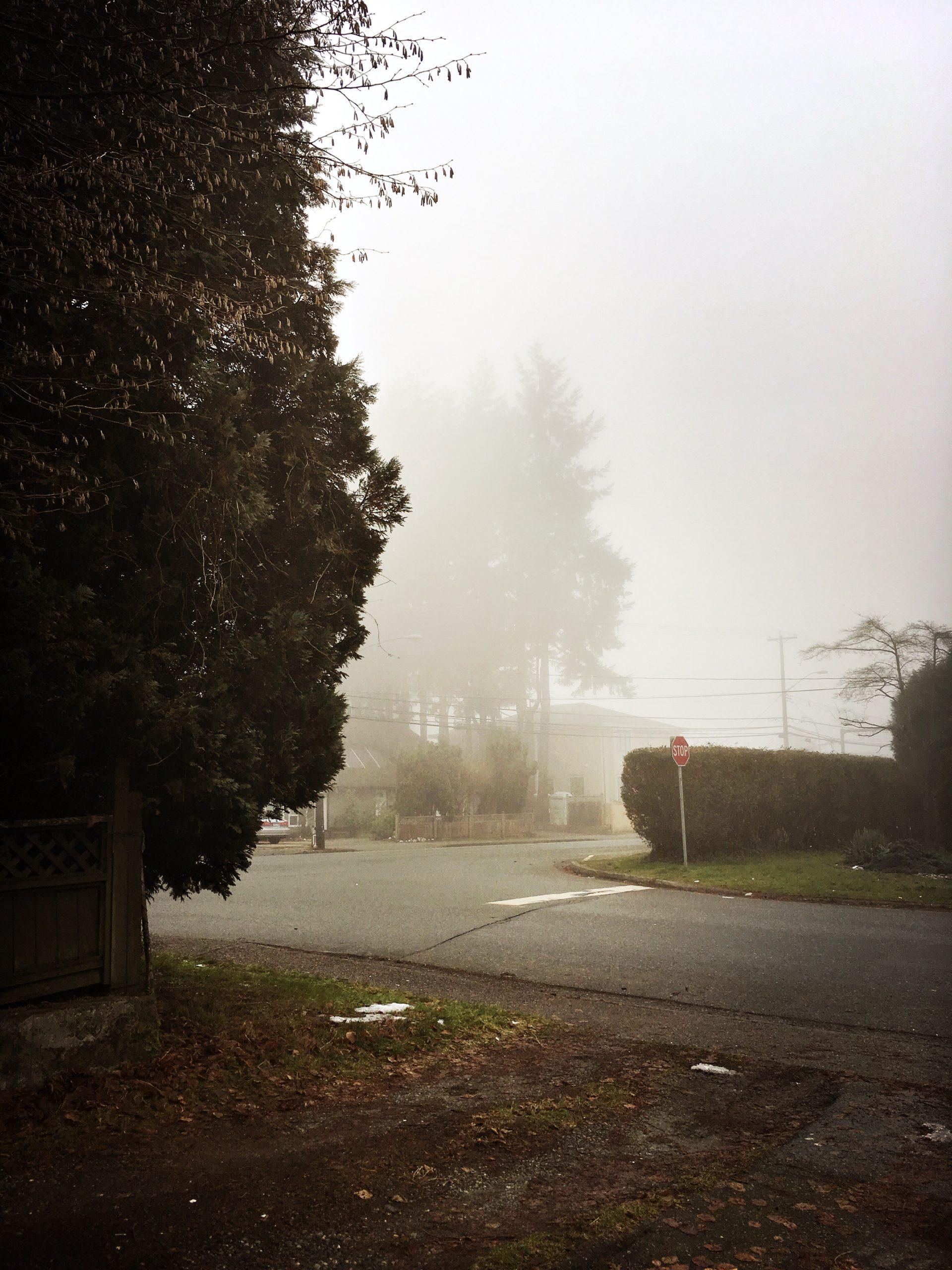 Fog This