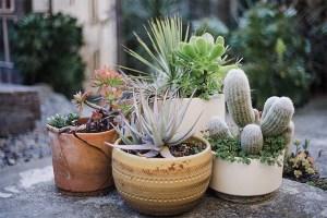 plant-nursery-23