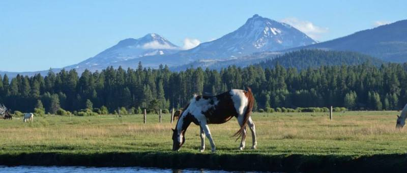 A horse drinknig water with mountains in the back ground