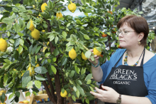 Jacqui Kelly - Totally Sugar - Green and Black's Corporate Chocolate Trees for Launch