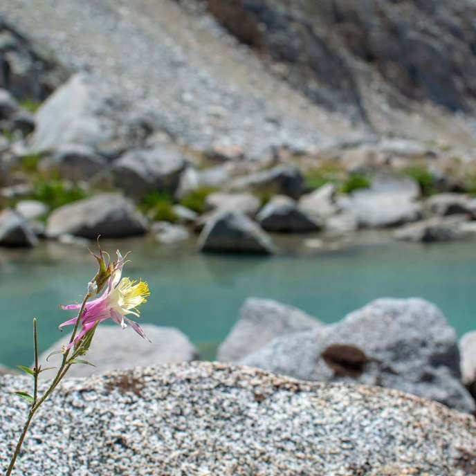 Neither the lake nor this Crimson Columbine want to conform to normal colors...