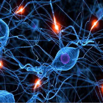 somatics and neuroplasticity
