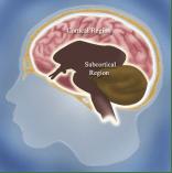 somatic neuroscience