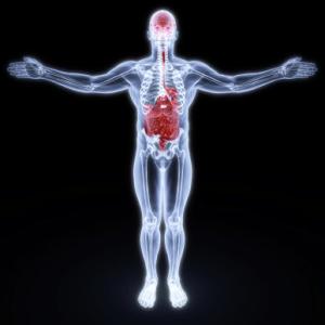 somatics body