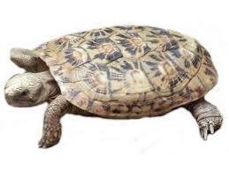 tortugas simbología mágica