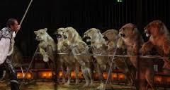 No más circos con animales