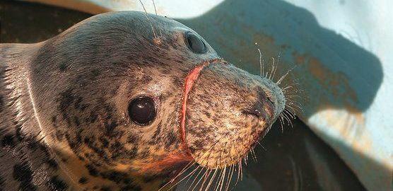 En Asturias no se protege la fauna marina