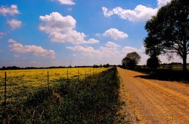 Dirt Road NW Louisiana