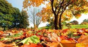 best fall activities in las vegas