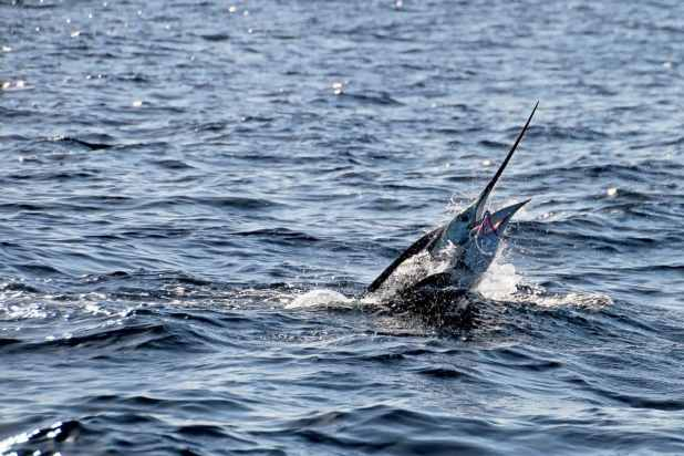 Top 3 Reasons to Try Sport Fishing in Cabo San Lucas 1