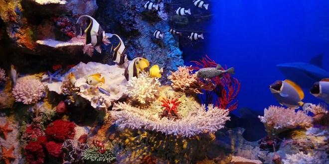 Top Reasons to Visit Cabo Pulmo National Marine Park