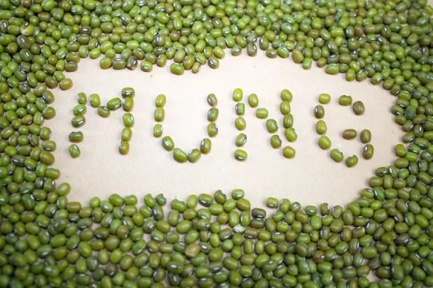 Mung dry beans lentils grain and mung inscription text