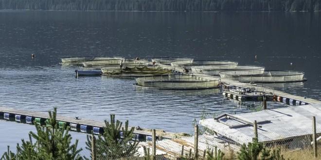 Can Farm-Raised Salmon Cause Cancer?