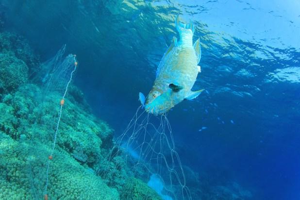 Environmental Destruction - an illegal dolphin's fishing net