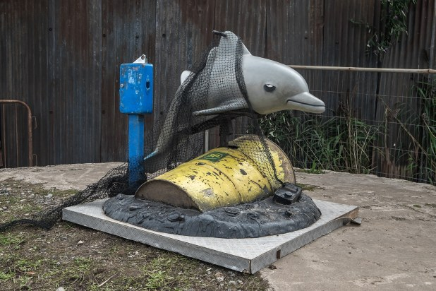 dolphin cough in nets