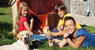 Best Pet-Related Home Projects