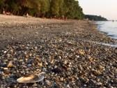 ドナウ川の岸辺