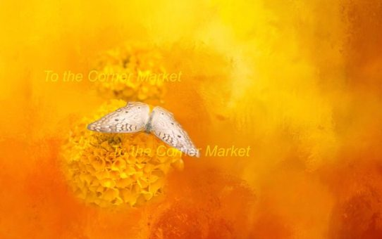 GOLDEN DREAM QUOTE – PHOTOGRAPHIC PRINT