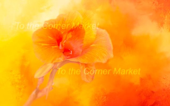 PRETTY ORANGE CALLA LILLY – PHOTOGRAPHIC PRINT