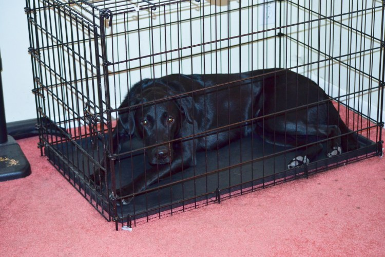 Heavy Duty Crates for Dogs with Separation Anxiety