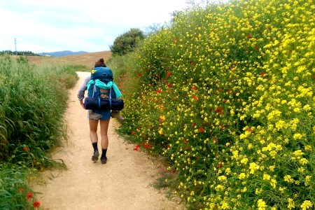 13310437 10208001515427851 9066207005251355337 n 1 - The Best Wildflowers along El Camino de Santiago