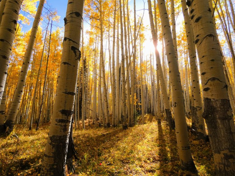 Aspen Grove scaled - 3 Best Places for Fall Colors in Crested Butte, Colorado