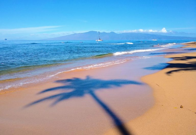 Palm Tree Beach Shadow scaled - Traveling to Maui during COVID may not be what you expect!