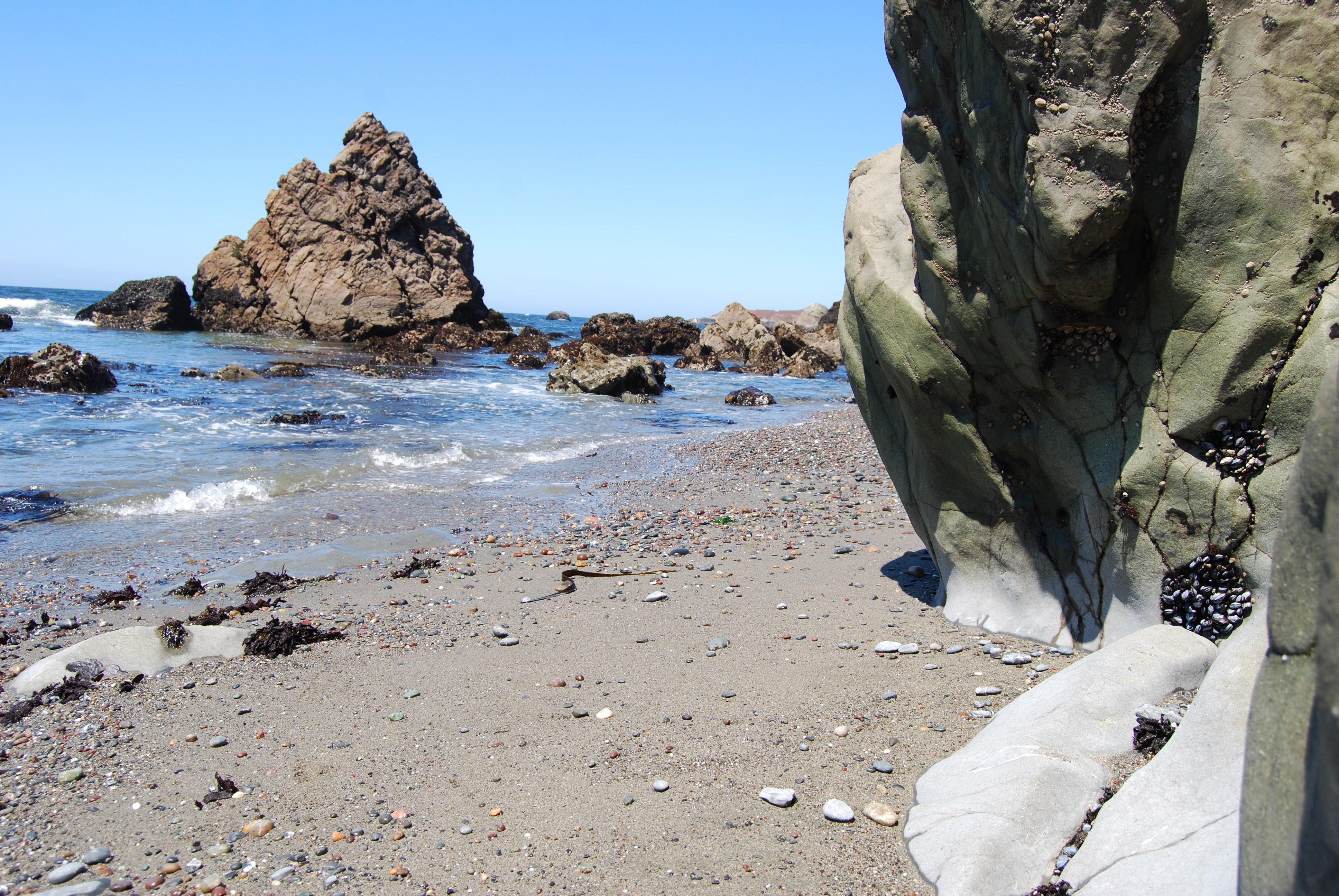 beach-at-bodega-bay-ca