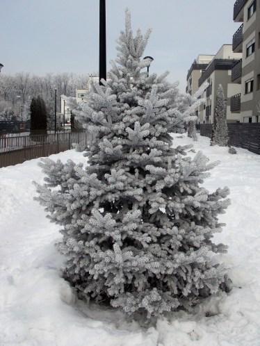frozen-ii-14